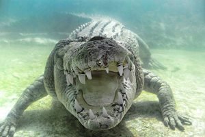 С крокодилами в Мексике