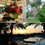 Отзывы: в Египет, Шарм эль Шейх. Отель Sultan Gardens Resort 5*