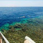 Отзывы: в Египет, Шарм эль Шейх. Отель Rehana Royal Aqua Beach Resort & Spa 5*