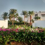 Отзывы: в Египет, Шарм эль Шейх. Отель SUNRISE Diamond Beach Resort 5*