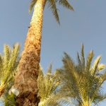 Отзывы: в Египет, Шарм эль Шейх. Отель Siva Sharm Resort & Spa 5*