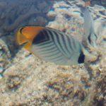 Отзывы: в Египет, Шарм-эль-Шейх. Отель Rehana Sharm Resort, Aqua Park & Spa 4*