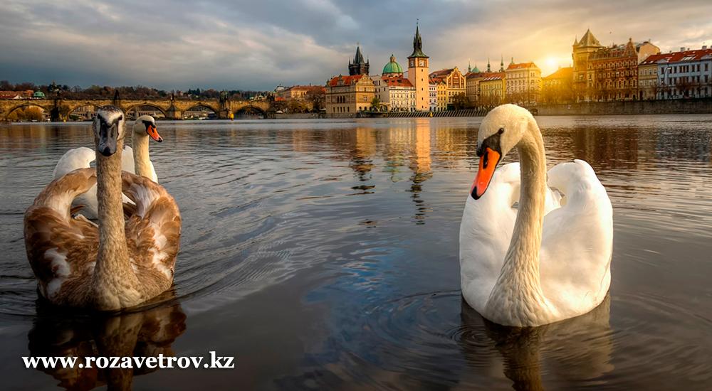 Подарок любимым к 8 марта, который запомнится надолго - туры в Чехию, весенняя Прага (7340-07)