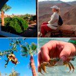 Отзывы: в Египет, Шарм-эль-Шейх. Отель Domina Coral Bay Oazis 5*