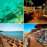 Отзывы: в Египет, Шарм-эль-Шейх. Отель Reef Oasis Beach Resort 5*